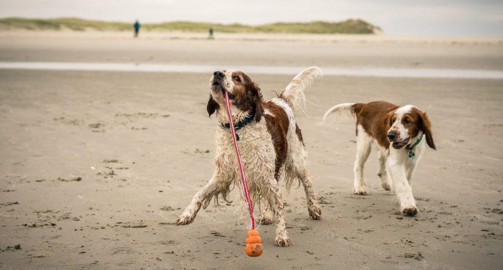 Yve und Murphy am Strand