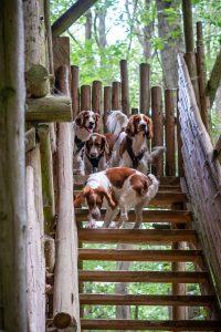 Hunde auf Hochsitz